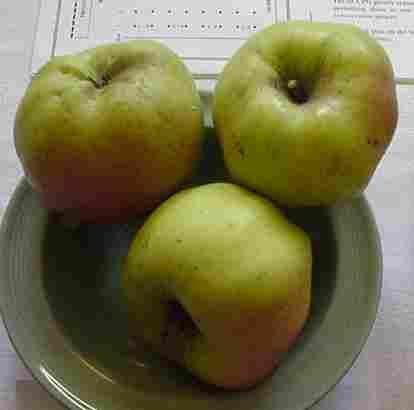 qualité pomme belle boskoop